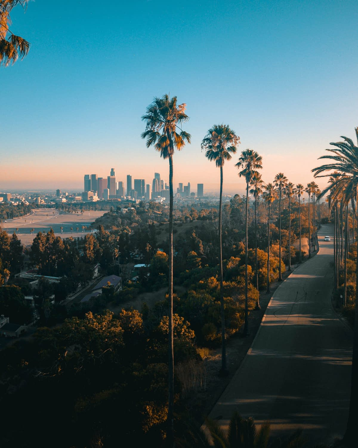 palm trees and a blue sky in los angeles