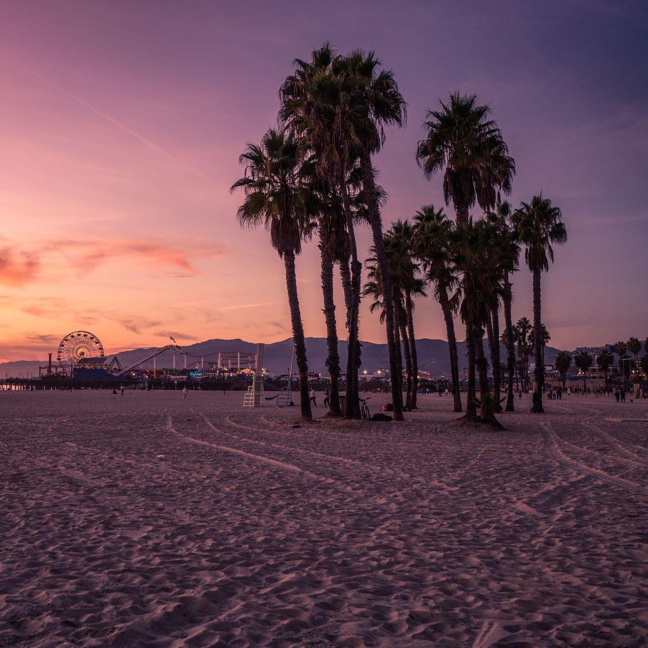 venice beach palm trees at sunset